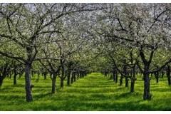 Електронни сайтове за овощен разсадник