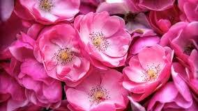 Доставка на цветя от магазин онлайн – ползите