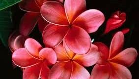 Обичайте с езика на цветята