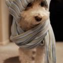 Какво да правите, ако кучето ви настине?